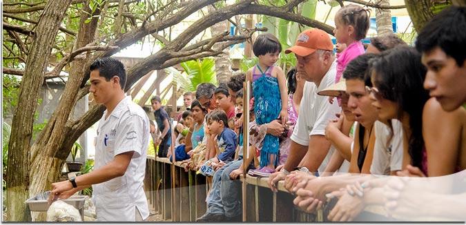 """Hotel Pacífica Ixtapa Todo Incluido. Gracias a la cercanía de Pacífica con los campos de golf """"Palma Real"""" usted podrá poner en práctica sus habilidades en una superficie de 60 hectáreas con 18 hoyos"""